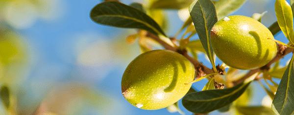 Argan fruit