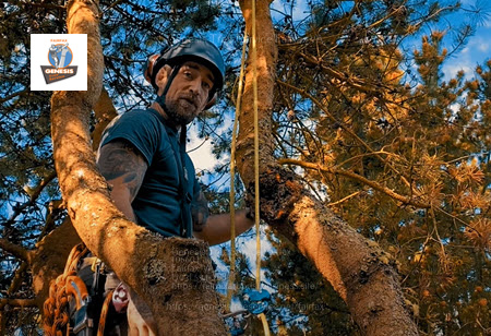 Fairfax arborist recommending tree crown cleaning service