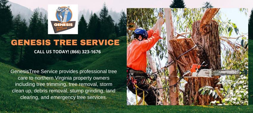 Genesis Tree Service - Google Site Banner