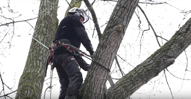 Genesis Tree Service arborist performing tree care services in northern Virginia