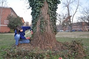 Person removing ivy from a large tree