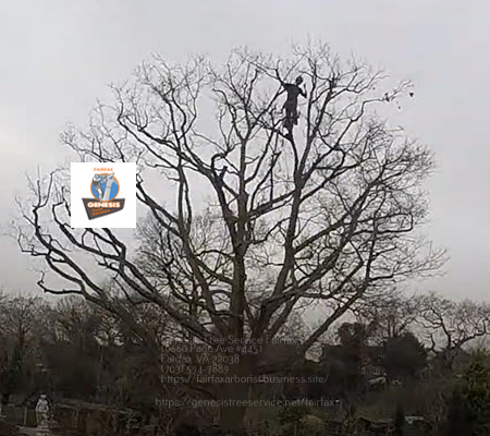 Tree thinning and crown resotoration