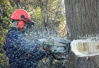 Specialist cutting a tree