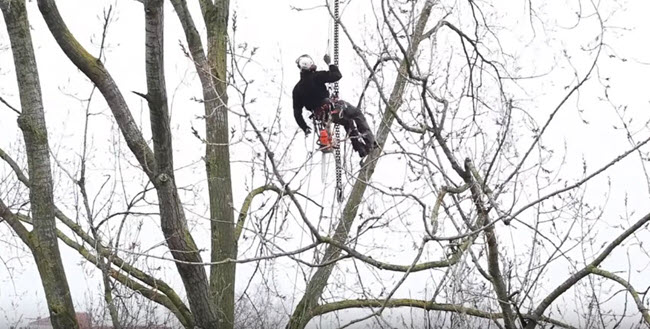 Tree specialist trimming and pruning a tree in Virginia
