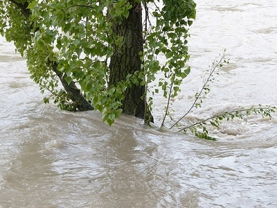 Tree in flooded river