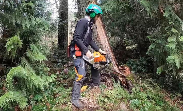certified arborist from Genesis Tree Service cutting tree trunk