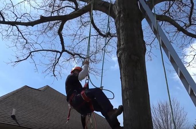 Genesis Tree Service - tree removal