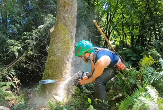 Genesis Tree Service arborist cutting down tree