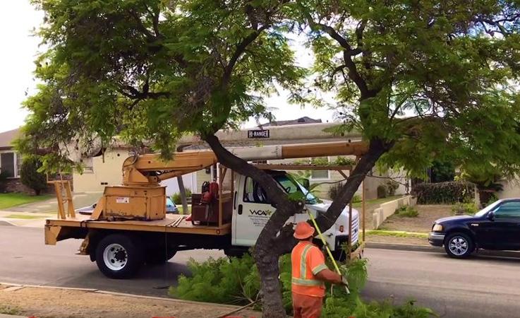 residential hazardous tree takedown by Genesis Tree Service