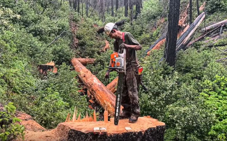 Tree Clearing by Genesis Tree Service