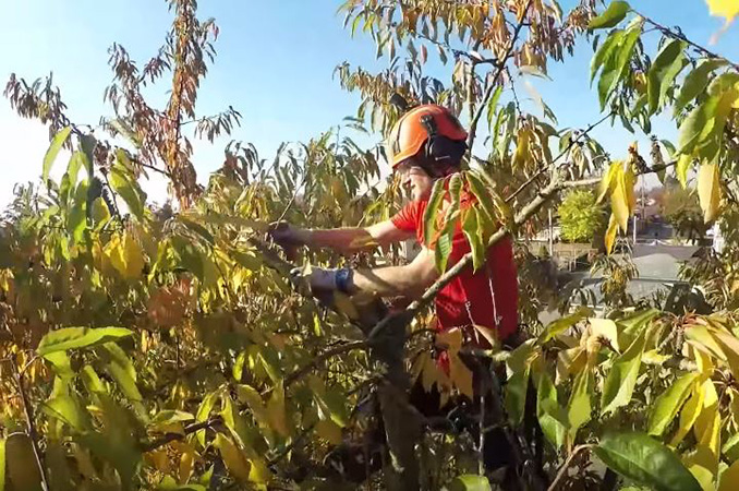 residential tree care services by Genesis Tree Service