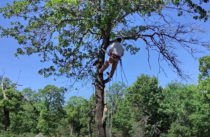 Safe tree climbing by Genesis Tree Service