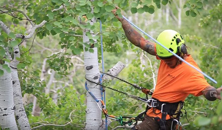 Forest tree care - Genesis Tree Care