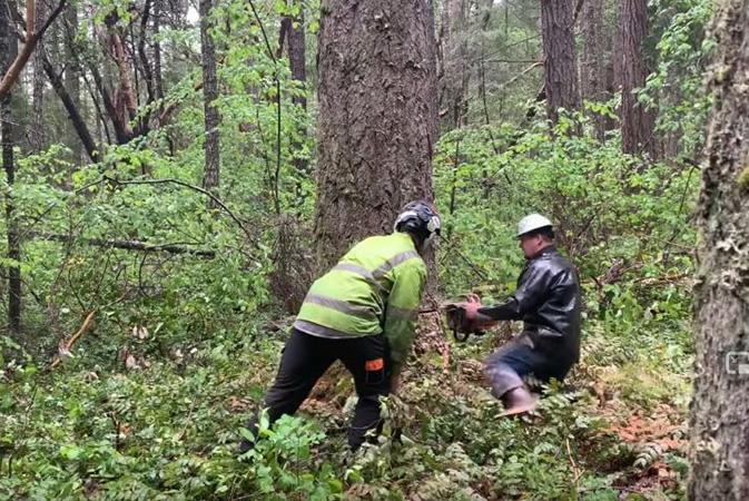 Genesis Tree Service arborists performing tree removal