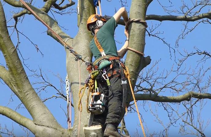 Genesis Tree Service - Tree Climbing