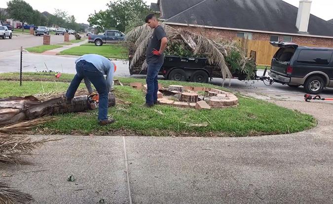 Genesis Tree Service experts working on tree stumps