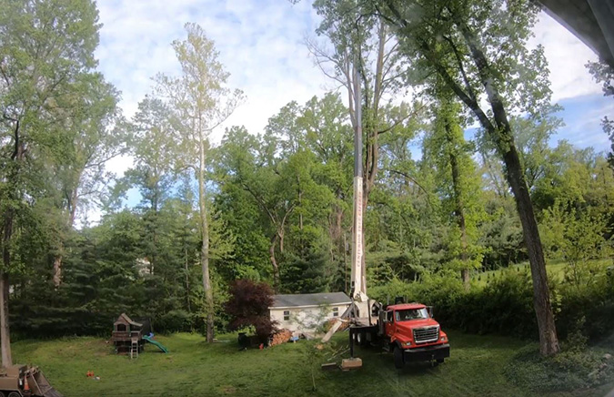 Large tree removal with crane by Genesis Tree Service Gainesville VA
