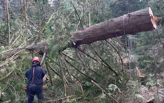 Large tree removal by Genesis Tree Service Culpeper VA