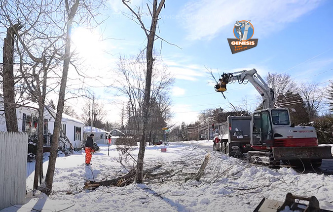 Tree removal being done in the winter