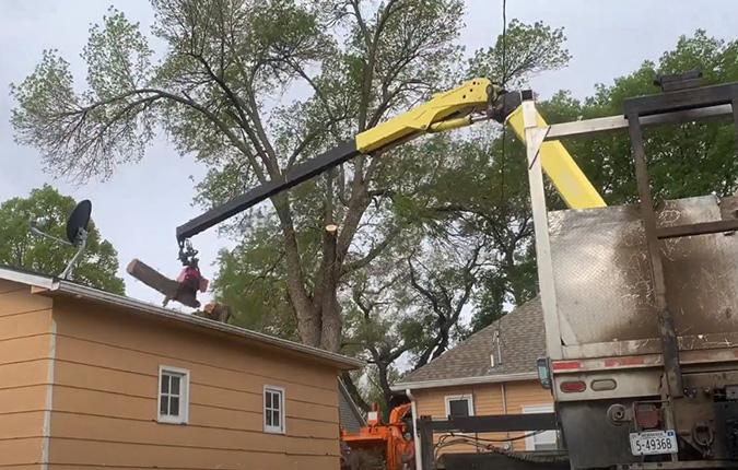 Genesis Tree Service large tree removal