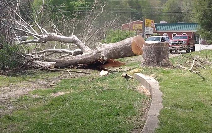 Tree Removal by Genesis Tree Service