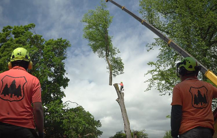 Genesis Tree Service tree removal for golf course maintenance