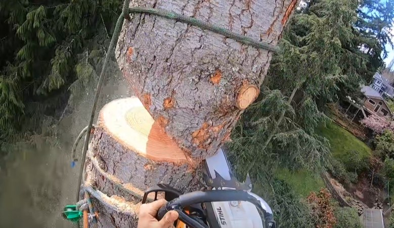 tree removal by Genesis Tree Services