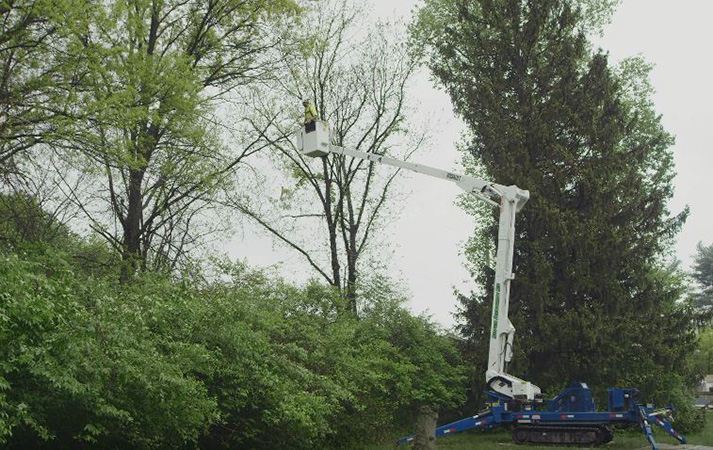 residential tree removal by Genesis Tree Service