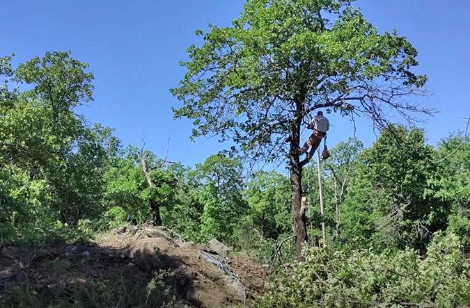 Genesis Tree Service tree removal preparation