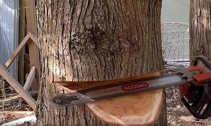 Tree cutting by Genesis Tree Service
