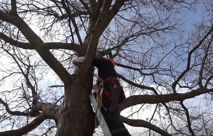 Genesis Tree Service - Tree Thinning