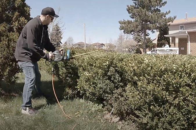 Genesis tree service arborist trimming brush