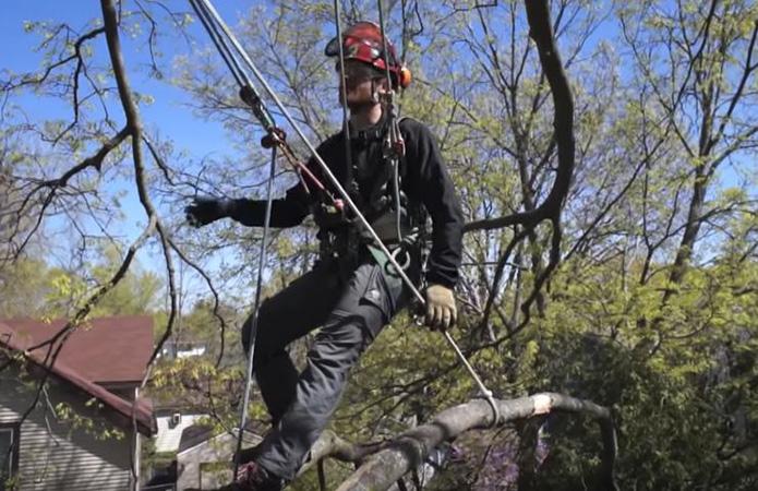 Genesis Tree Service tree climbing cables