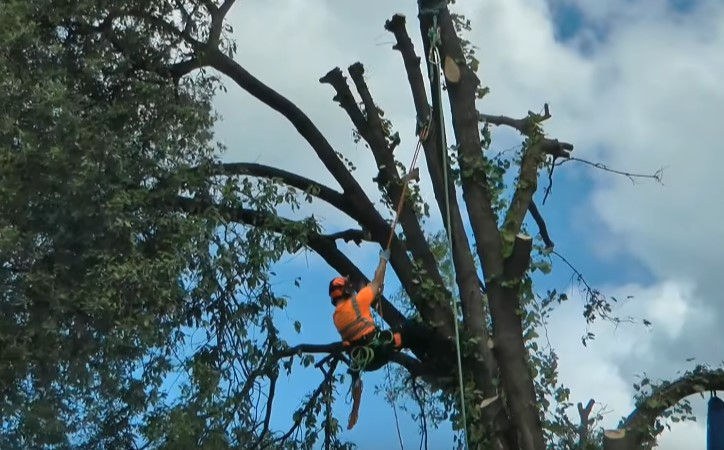 residential tree removal in Prince William County by Genesis Tree Service Manassas