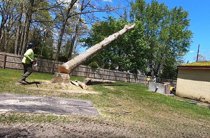 Genesis Tree Service - tree felling