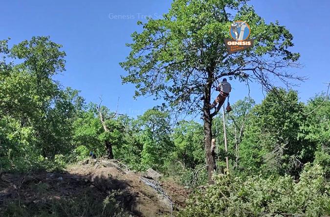 Culpeper tree maintenance by Genesis Tree Service