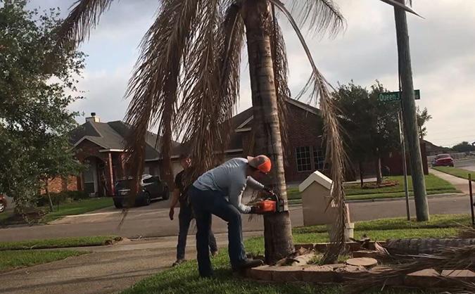Woodbridge Tree Services by Genesis Tree Service