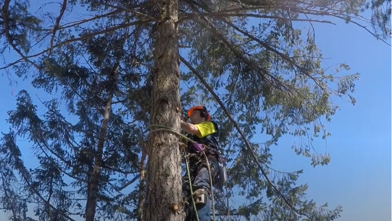 Tree climbing for tree trimming by Genesis Tree Service