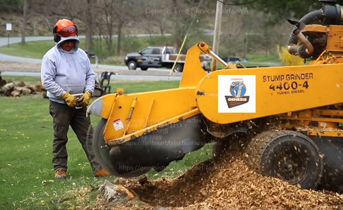 Stump grinding in Annandale by Genesis Tree Service Fairfax