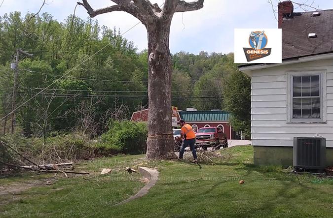 tree service fairfax county va